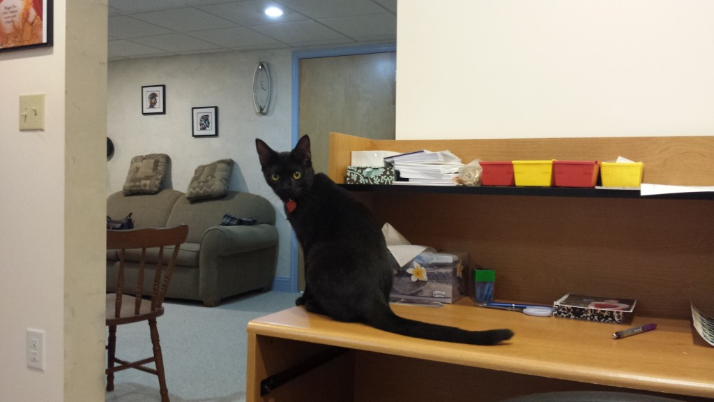 Luna on my desk