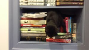 luna-in-the-bookshelves