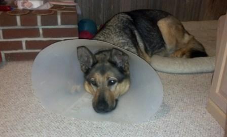 Sad Doggie, Bad Doggie